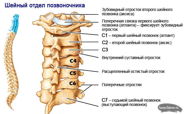 Osteochondrose der Halswirbelsäule: Ursachen, Symptome, Diagnose und ...